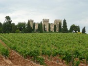 Castle-and-Vineyard